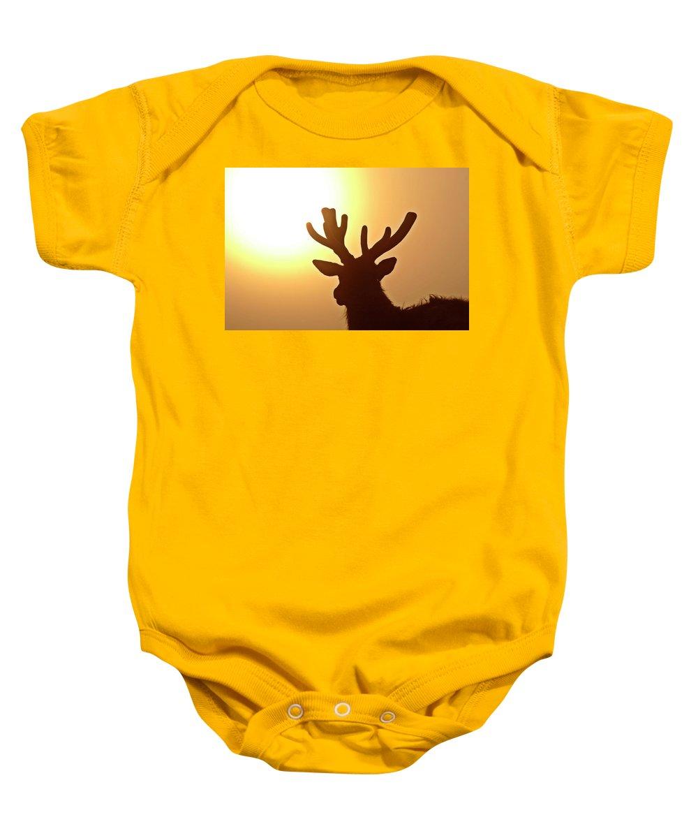 Elk Baby Onesie featuring the digital art Sun Glaring Over A Bull Elk by Mark Duffy