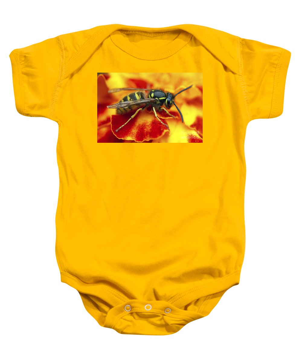 Insect Baby Onesie featuring the photograph Wasp In The Bloom by Michal Boubin