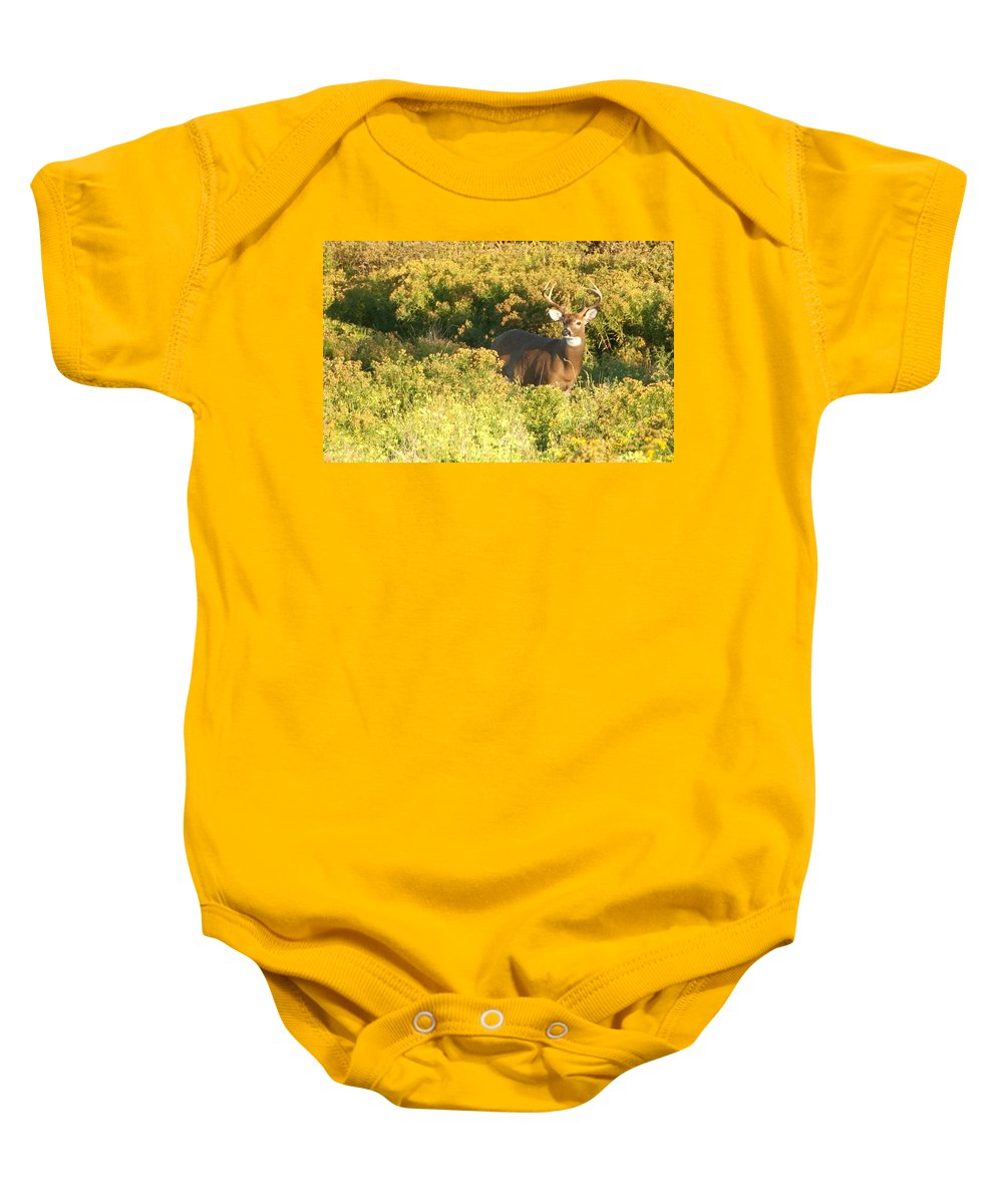 Deer Baby Onesie featuring the photograph Whitetail Buck by Steven Natanson