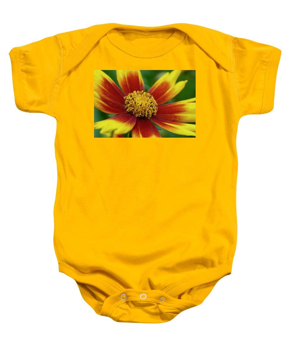 Rudbeckia Baby Onesie featuring the mixed media Rudbeckia by Smart Aviation