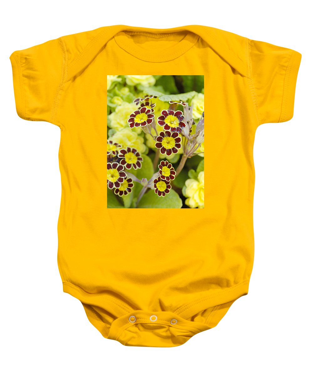 Flower Baby Onesie featuring the photograph Primula Gold Lace by Victor Lord Denovan