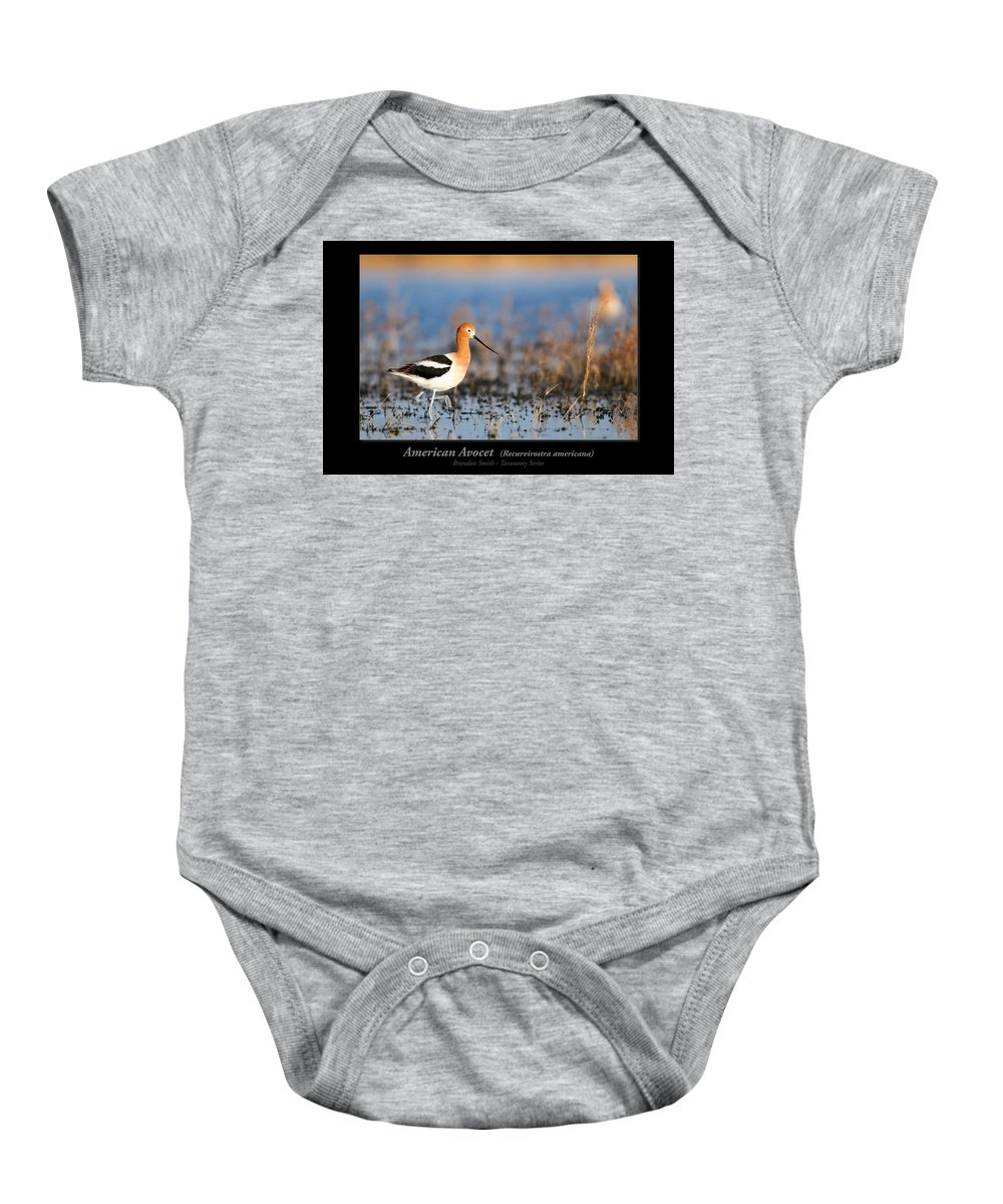 Alberta Baby Onesie featuring the photograph American Avocet by Brandon Smith