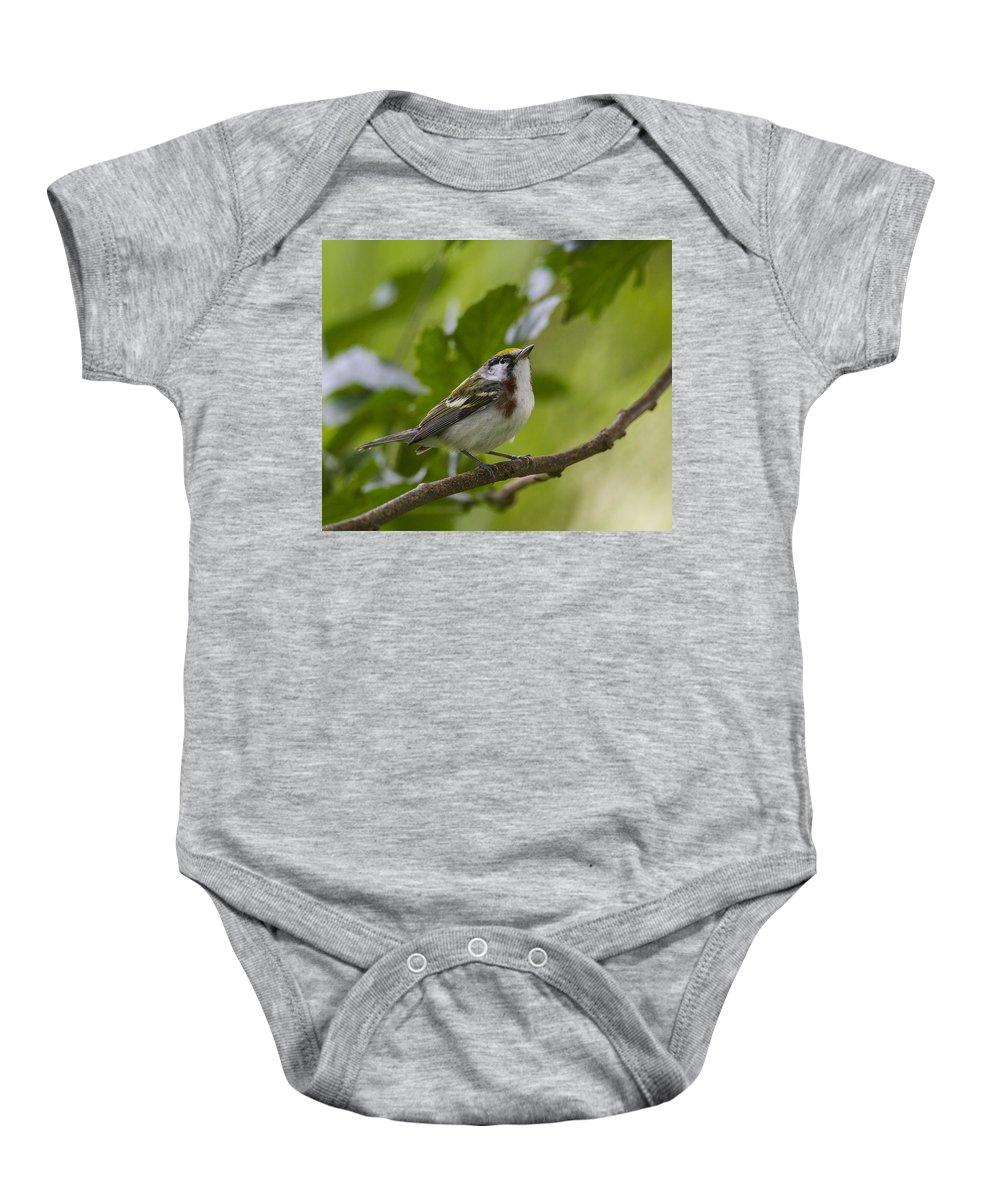 Doug Lloyd Baby Onesie featuring the photograph Chesnutsided Warbler by Doug Lloyd
