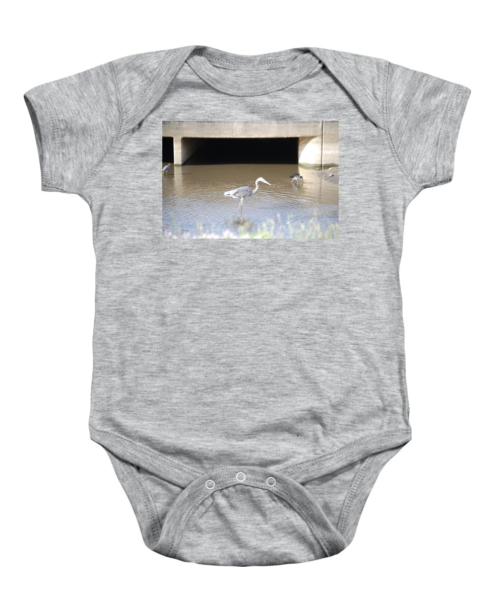 Group Feeding Hole. Florida Baby Onesie featuring the photograph Great Blue Heron by Robert Floyd