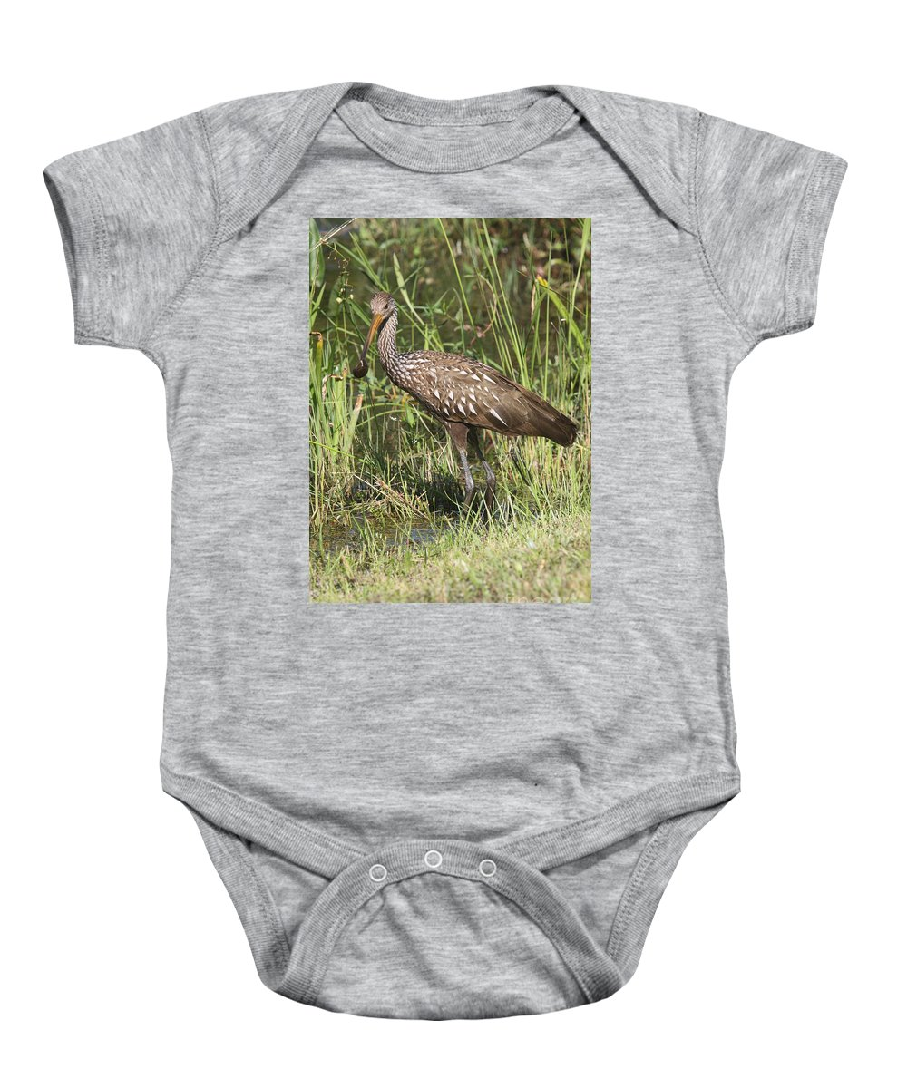 Limpkin Baby Onesie featuring the photograph Limpkin In The Glades by Christiane Schulze Art And Photography