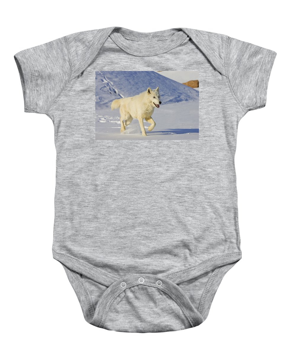 Wolf Baby Onesie featuring the photograph Majestic by Jack Milchanowski