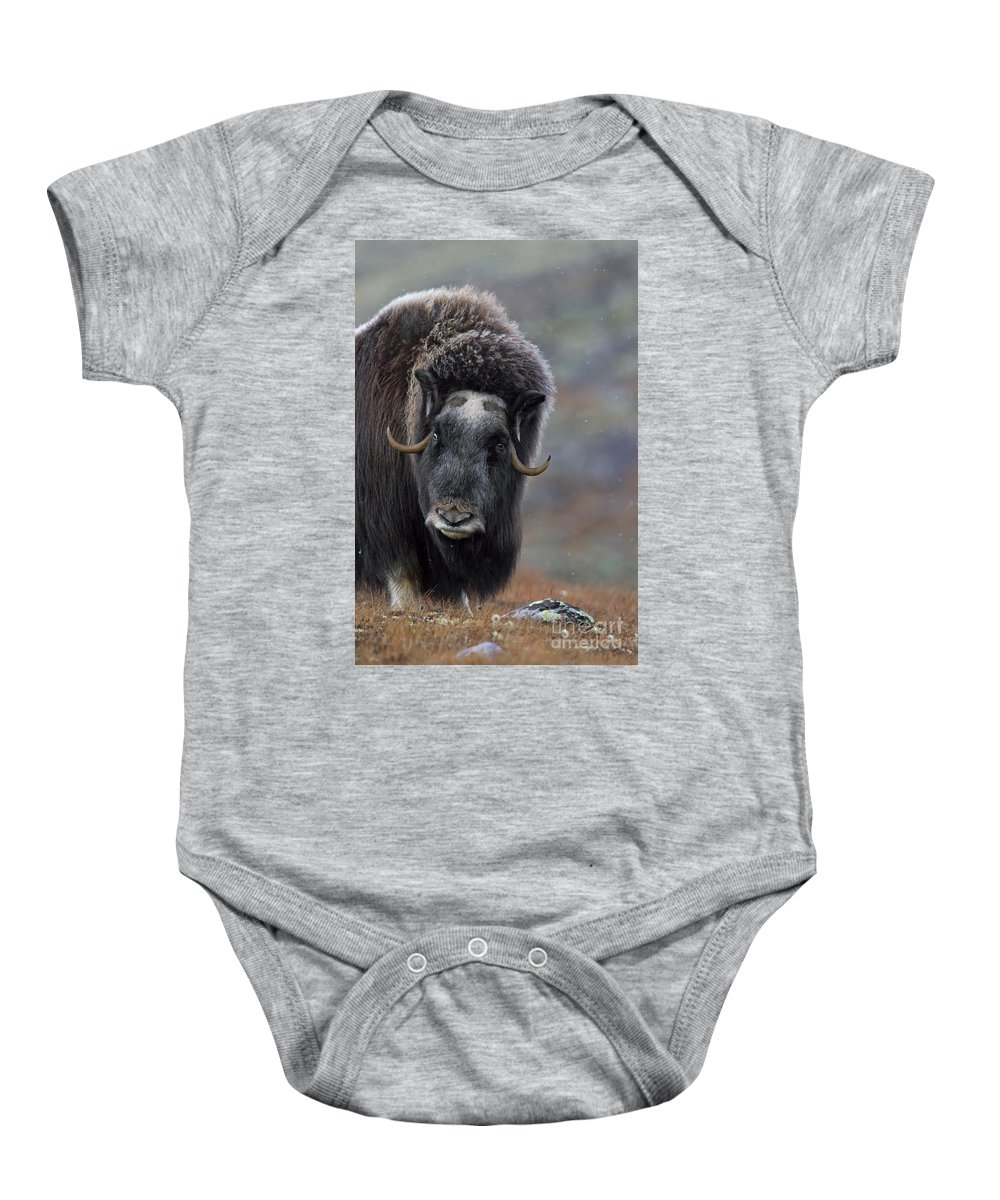 Muskox Baby Onesie featuring the photograph 120425p337 by Arterra Picture Library