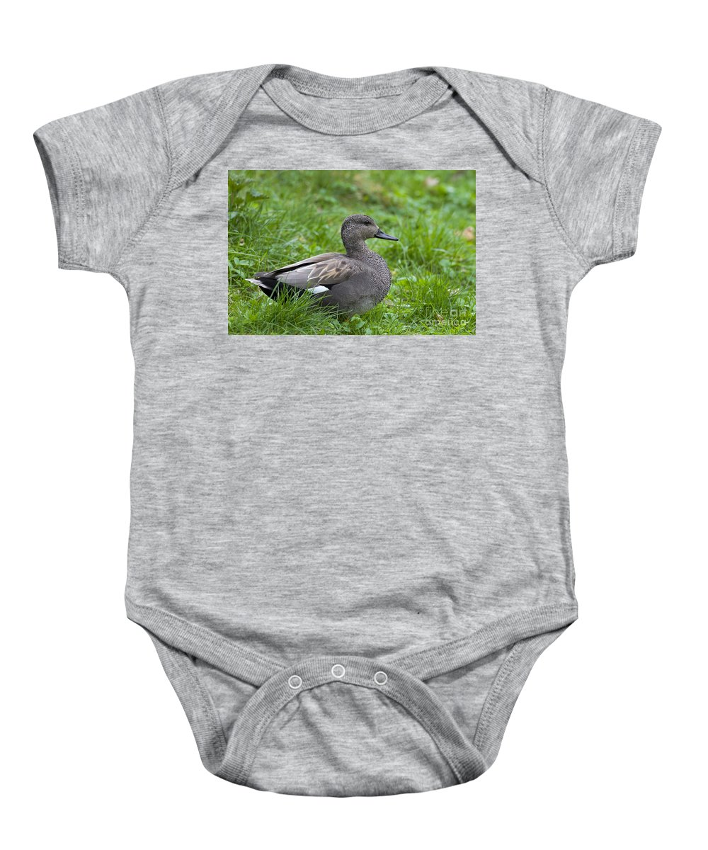 Anas Strepera Baby Onesie featuring the photograph 120520p321 by Arterra Picture Library