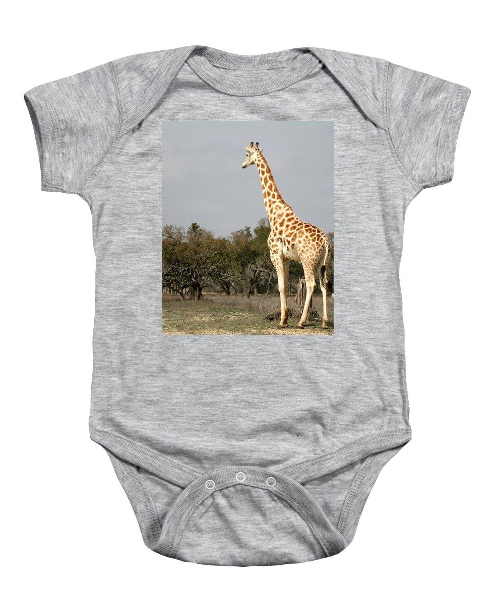 Giraffe Baby Onesie featuring the photograph Giraffe by Terry Fleckney