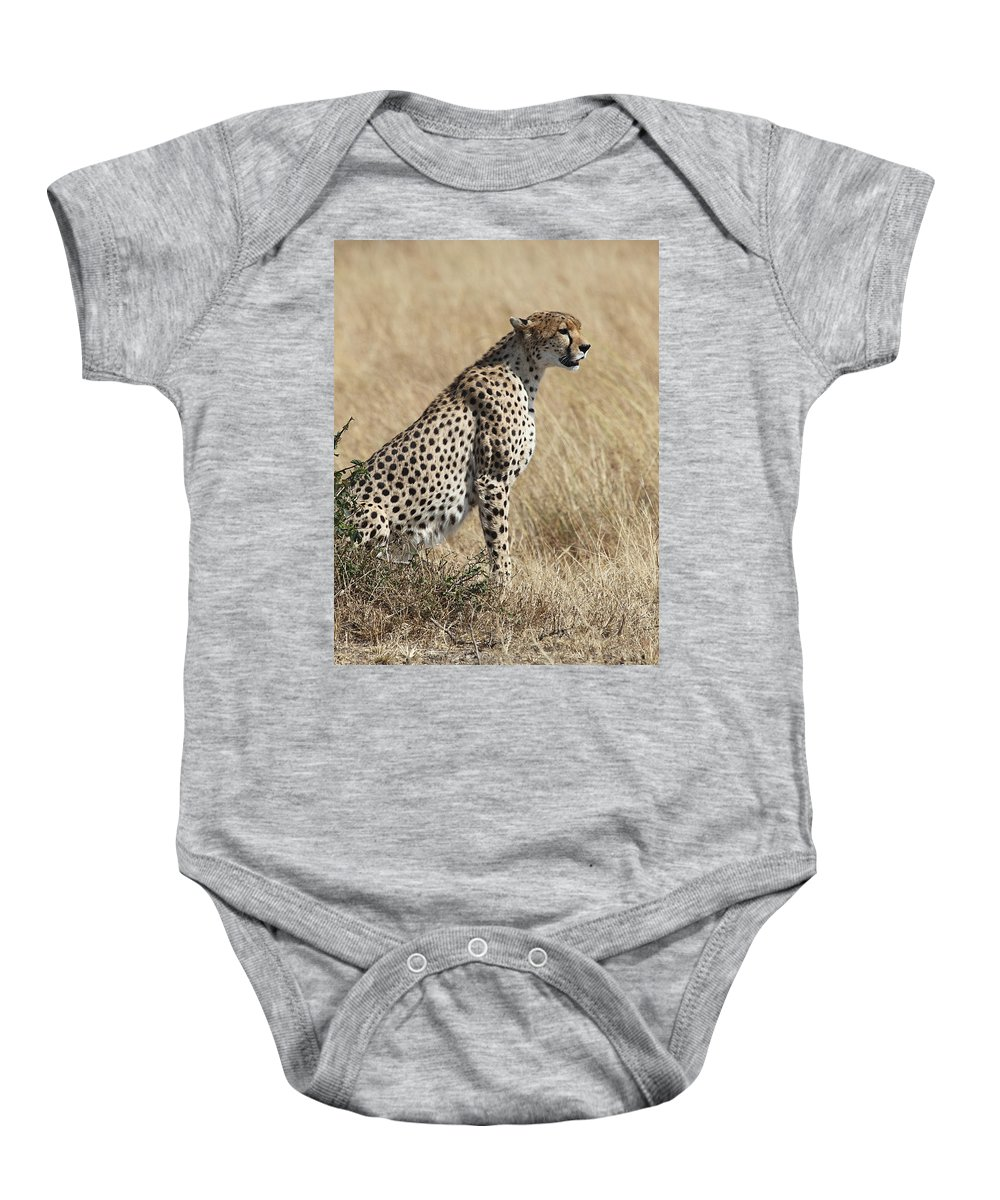Cheetah Baby Onesie featuring the photograph Cheetah Searching For Prey by Carole-Anne Fooks