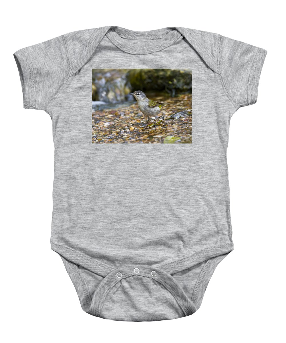 Doug Lloyd Baby Onesie featuring the photograph Tennessee Warbler by Doug Lloyd