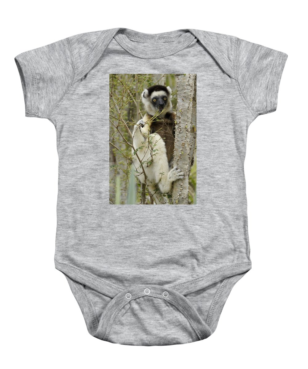 Africa Baby Onesie featuring the photograph Verreaux's Sifaka by Michele Burgess