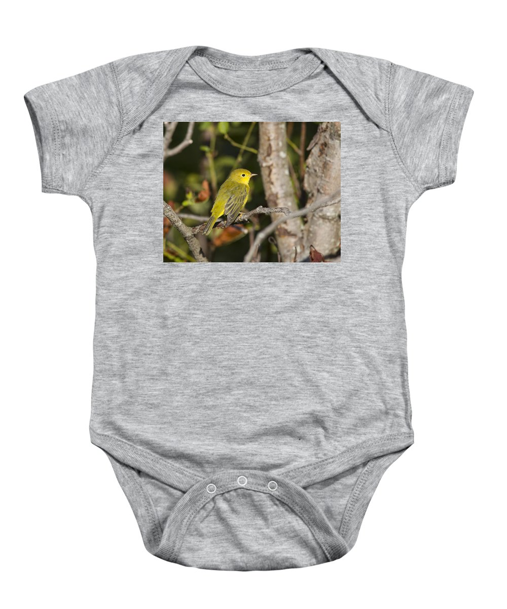 Doug Lloyd Baby Onesie featuring the photograph Yellow Warbler by Doug Lloyd