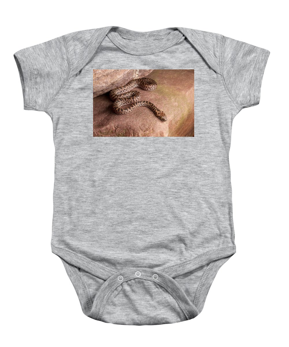 Spotted Python Baby Onesie featuring the photograph Spotted Python Antaresia Maculosa by David Kenny