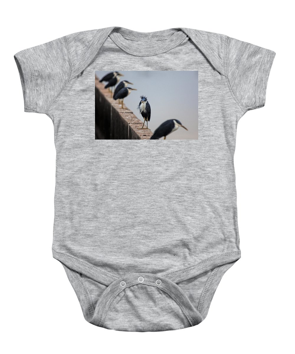 Pied-herons Baby Onesie featuring the photograph A Real Bad-hair Day by Douglas Barnard