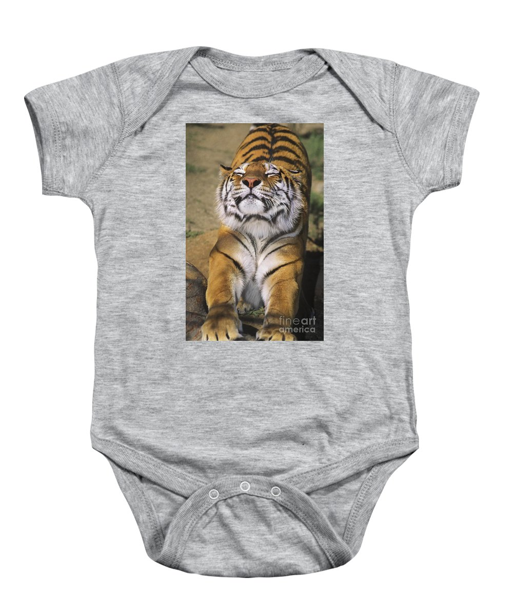 Siberian Tiger Baby Onesie featuring the photograph A Tough Day Siberian Tiger Endangered Species Wildlife Rescue by Dave Welling