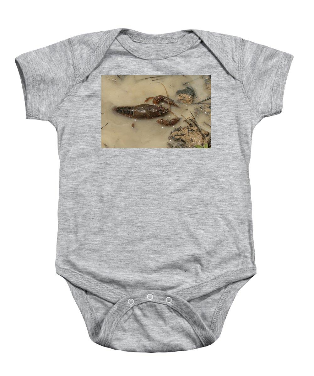 Genus Baby Onesie featuring the photograph Alabama Crawdaddy Taking A Swim by Kathy Clark