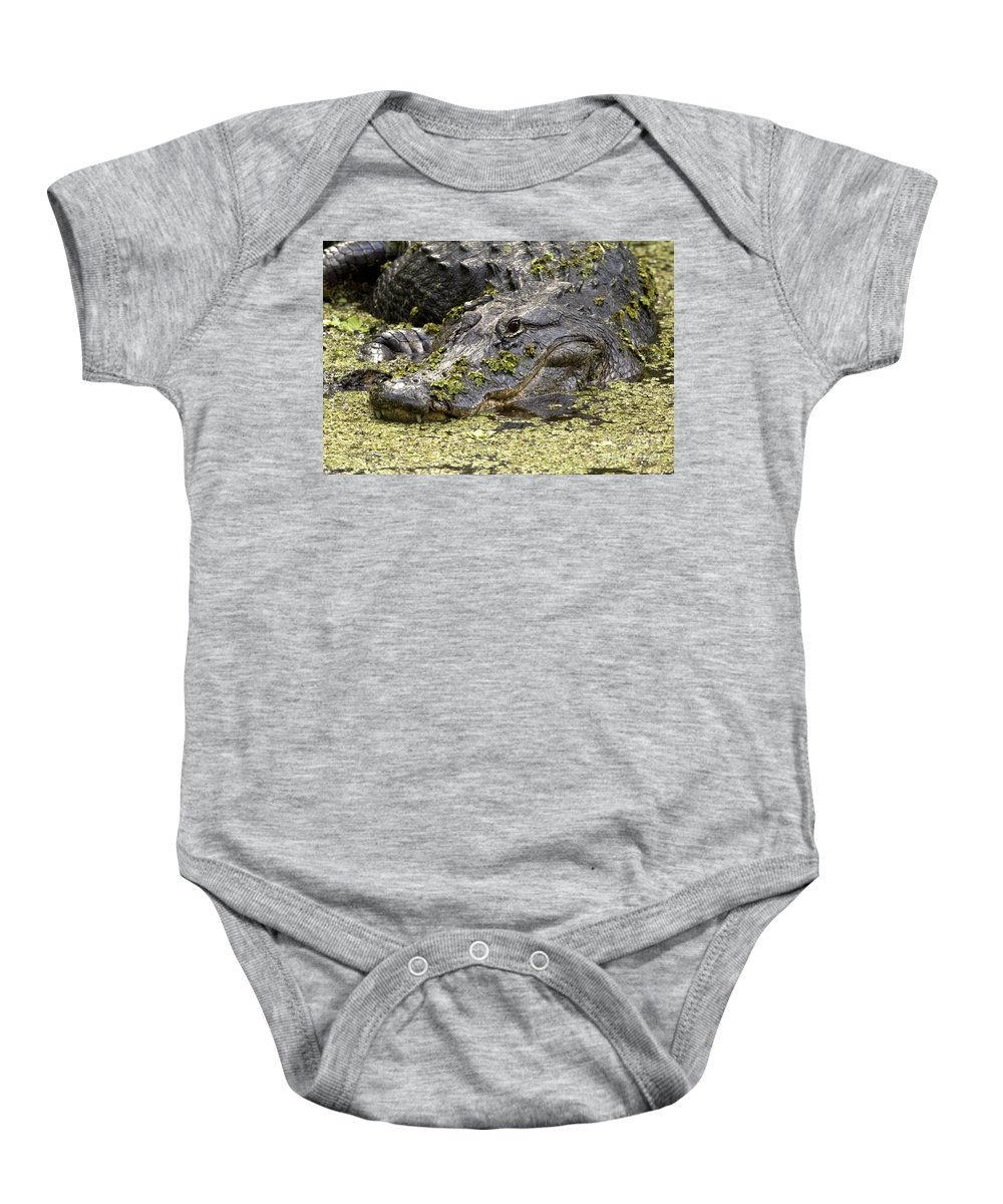 American Alligator Baby Onesie featuring the photograph American Alligator Print by Meg Rousher