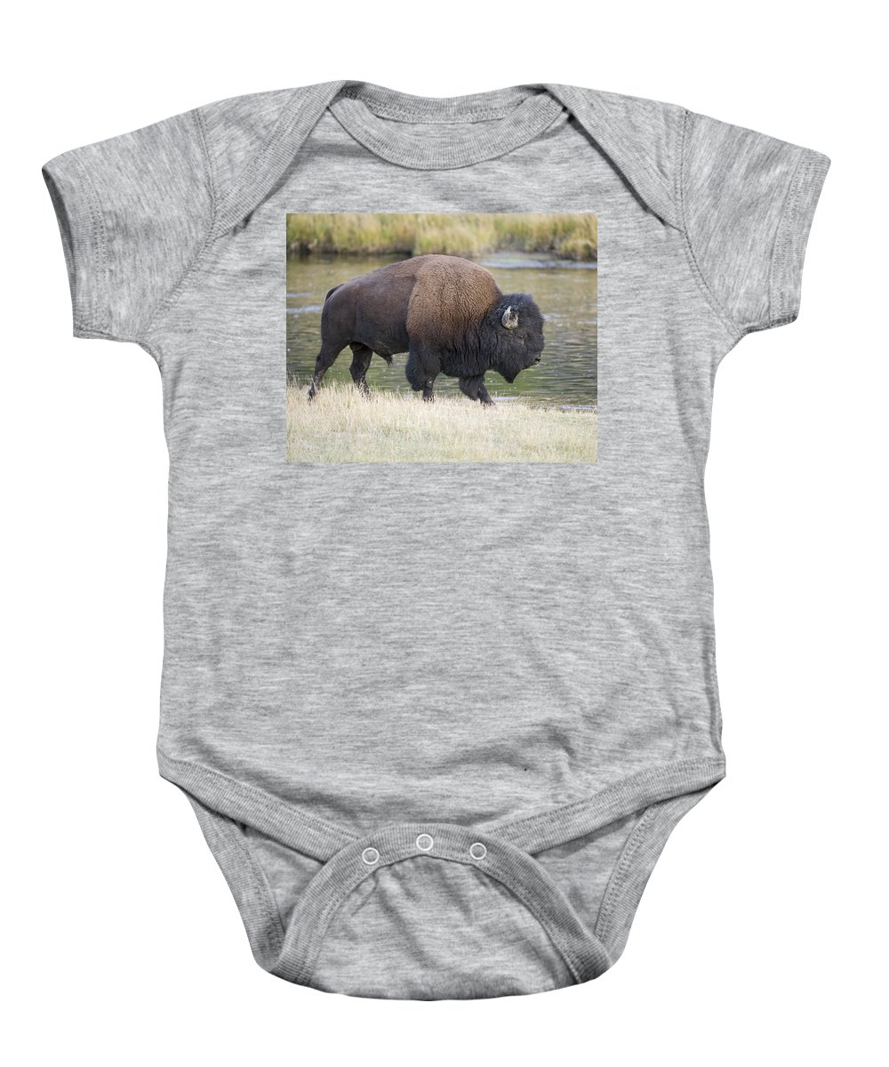 American Baby Onesie featuring the photograph American Bison On The Madison River by Gary Langley