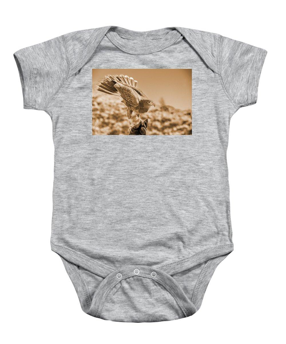 American Red Tail Hawk Baby Onesie featuring the photograph American Red Tail Hawk by LeeAnn McLaneGoetz McLaneGoetzStudioLLCcom