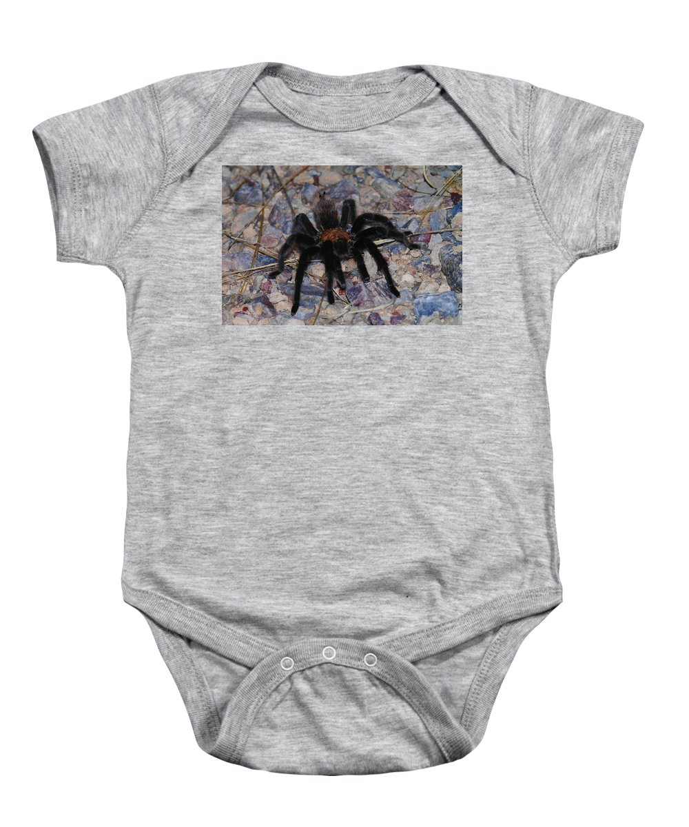 Spiders Baby Onesie featuring the photograph And Along Came A Little Spider . by Jeff Swan