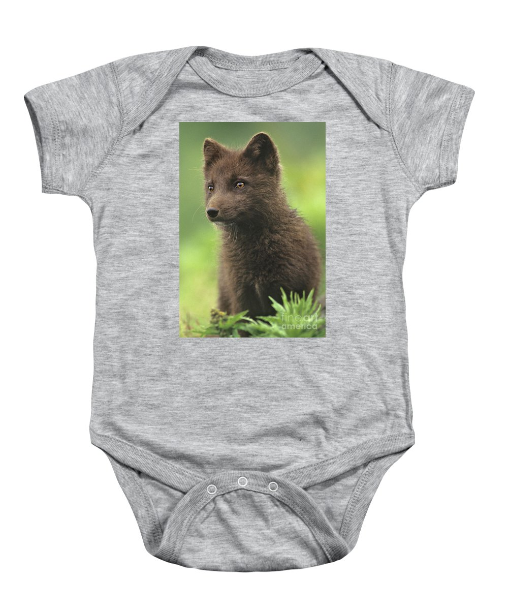 North America Baby Onesie featuring the photograph Arctic Fox Portrait Alaska Wildlife by Dave Welling