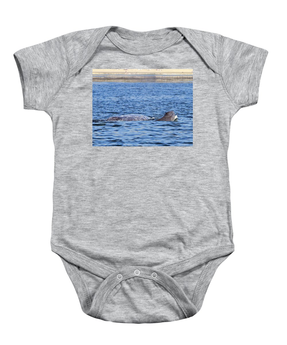 Baby Grey Whale Baby Onesie featuring the pyrography Baby And Mother by Shoal Hollingsworth