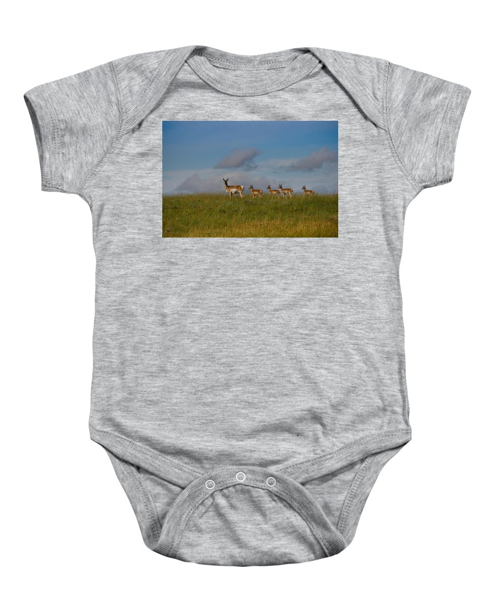 Antelope Baby Onesie featuring the photograph Babysitting - Antelope - Johnson County - Wyoming by Diane Mintle
