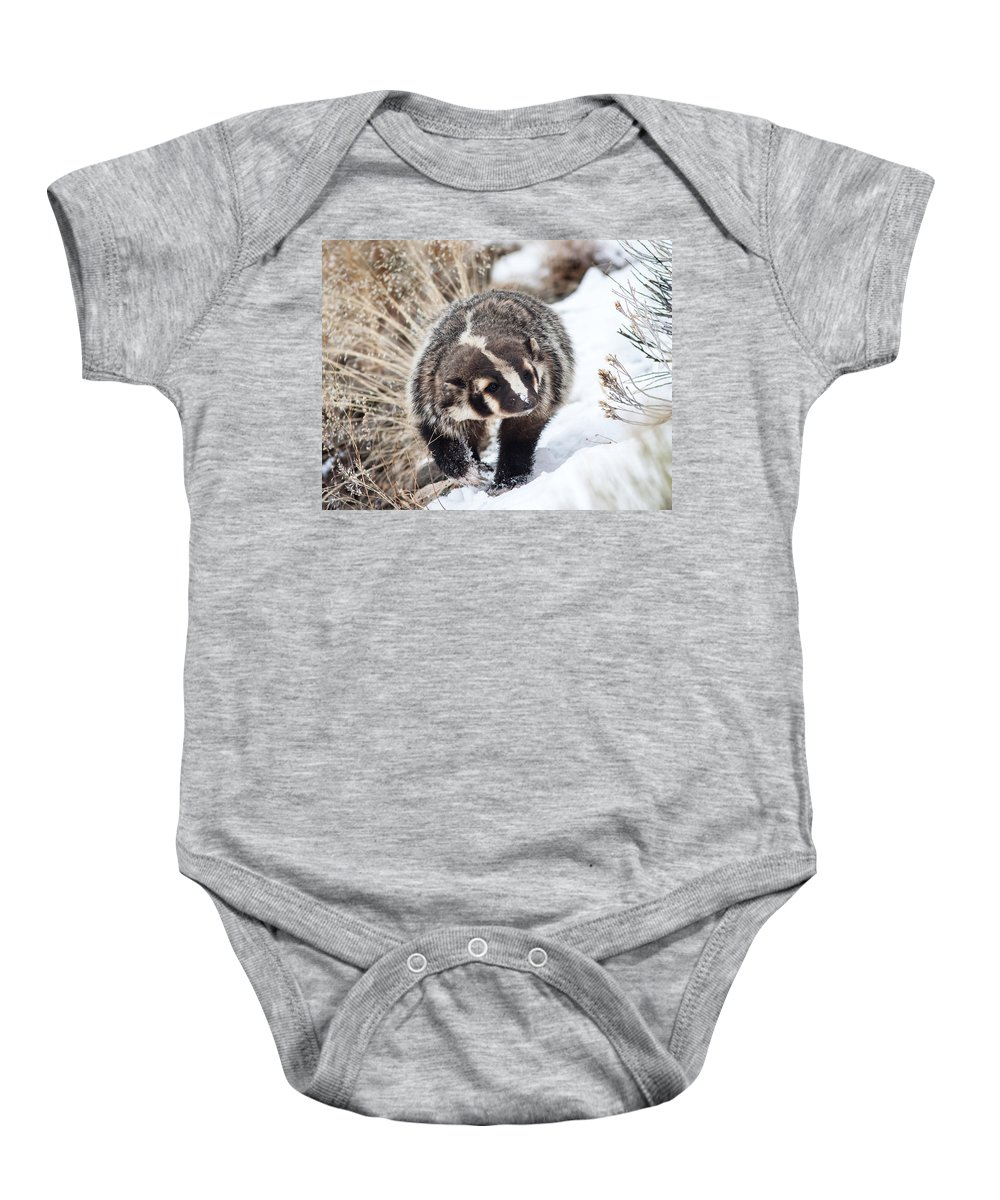 Badger Baby Onesie featuring the photograph Badger In The Snow by Jack Bell