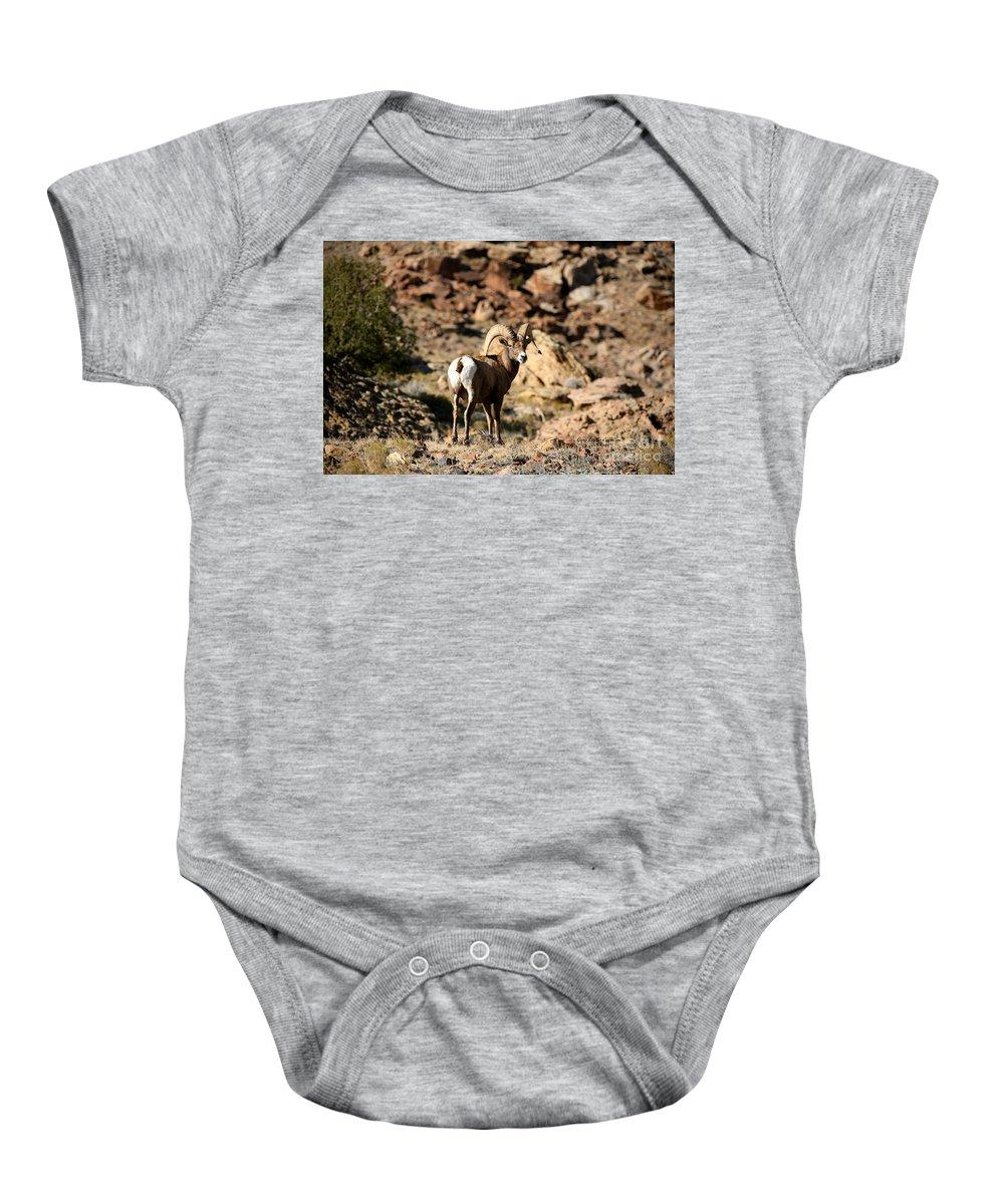 Wildlife Baby Onesie featuring the photograph Bighorn Stare by Gary Emilio Cavalieri