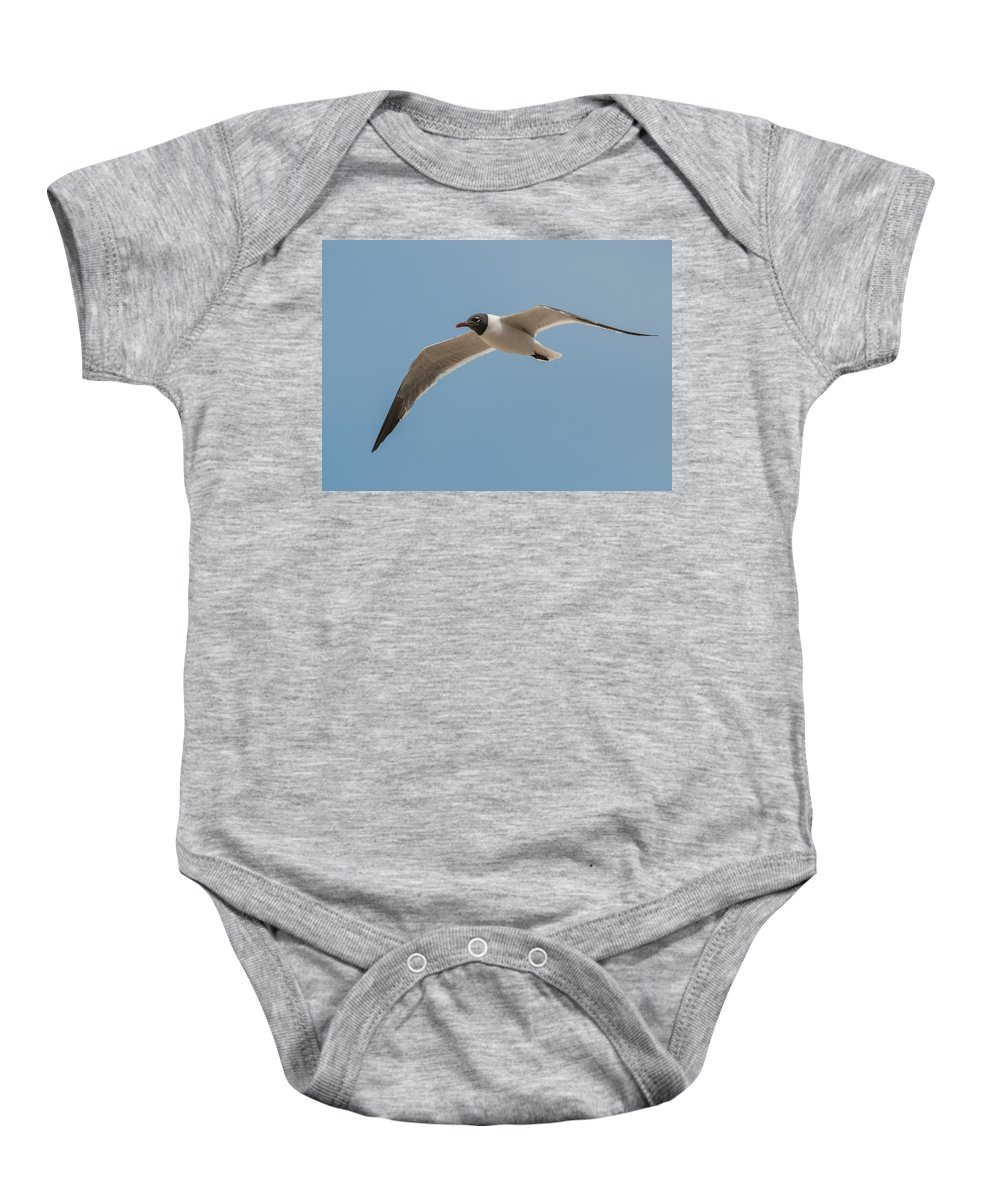 Black Baby Onesie featuring the photograph Black Headed Gull by Photos By Cassandra