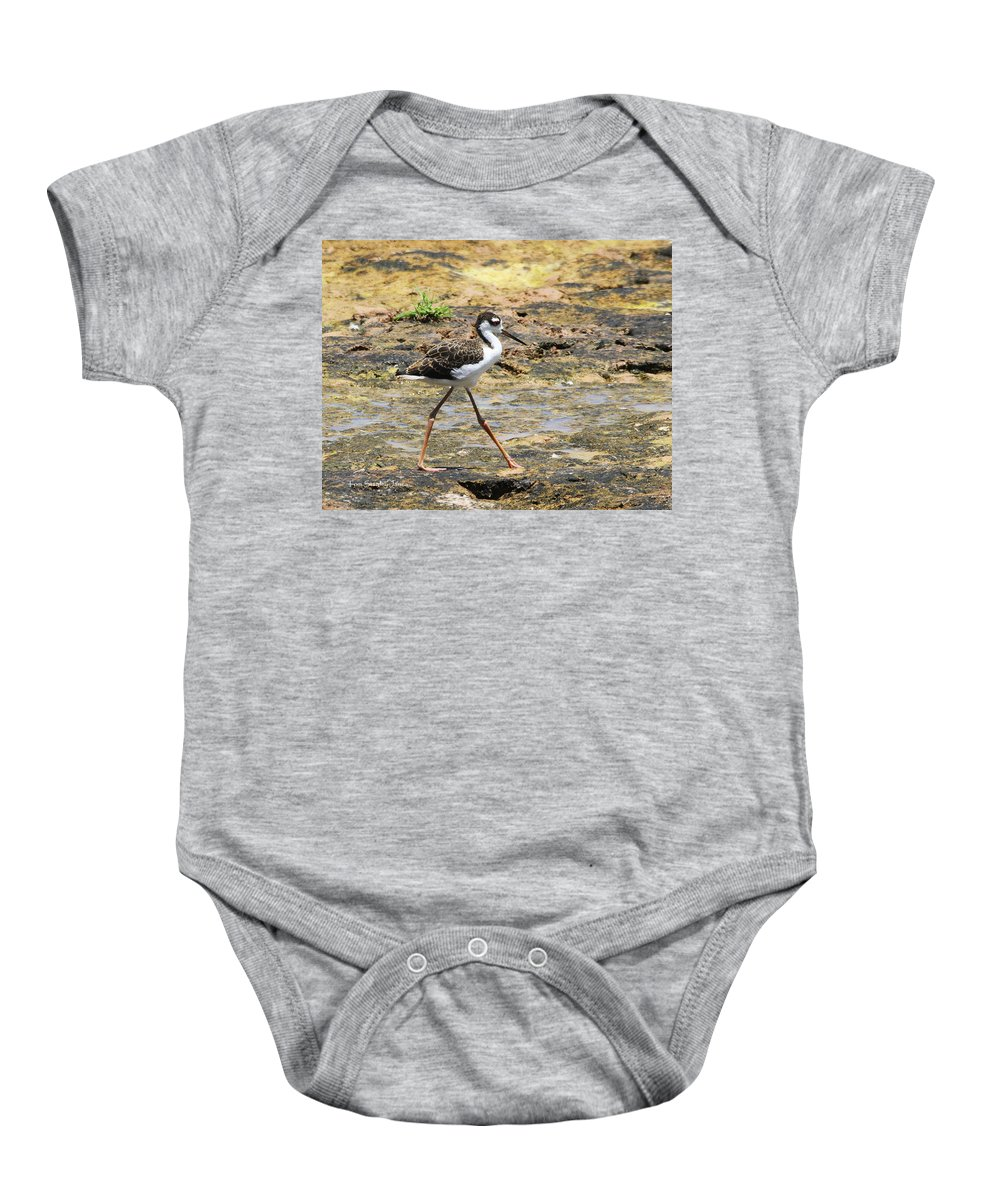 Black Neck Stilt Baby Onesie featuring the photograph Black Neck Stilt Chick Eats And Eats by Tom Janca