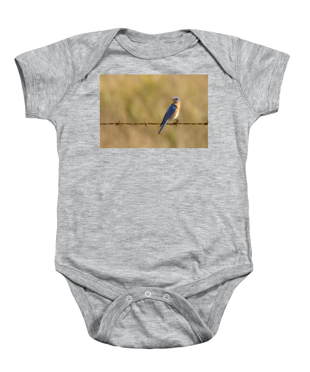 Bluebird Baby Onesie featuring the photograph Bluebird On A Wire by Sandy Swanson