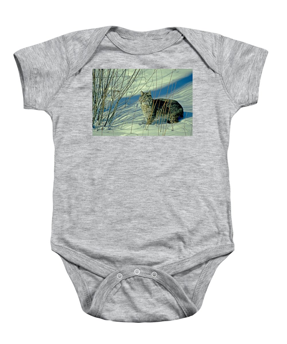 Bobcat Baby Onesie featuring the photograph Bobcat In Snow by Eric Albright