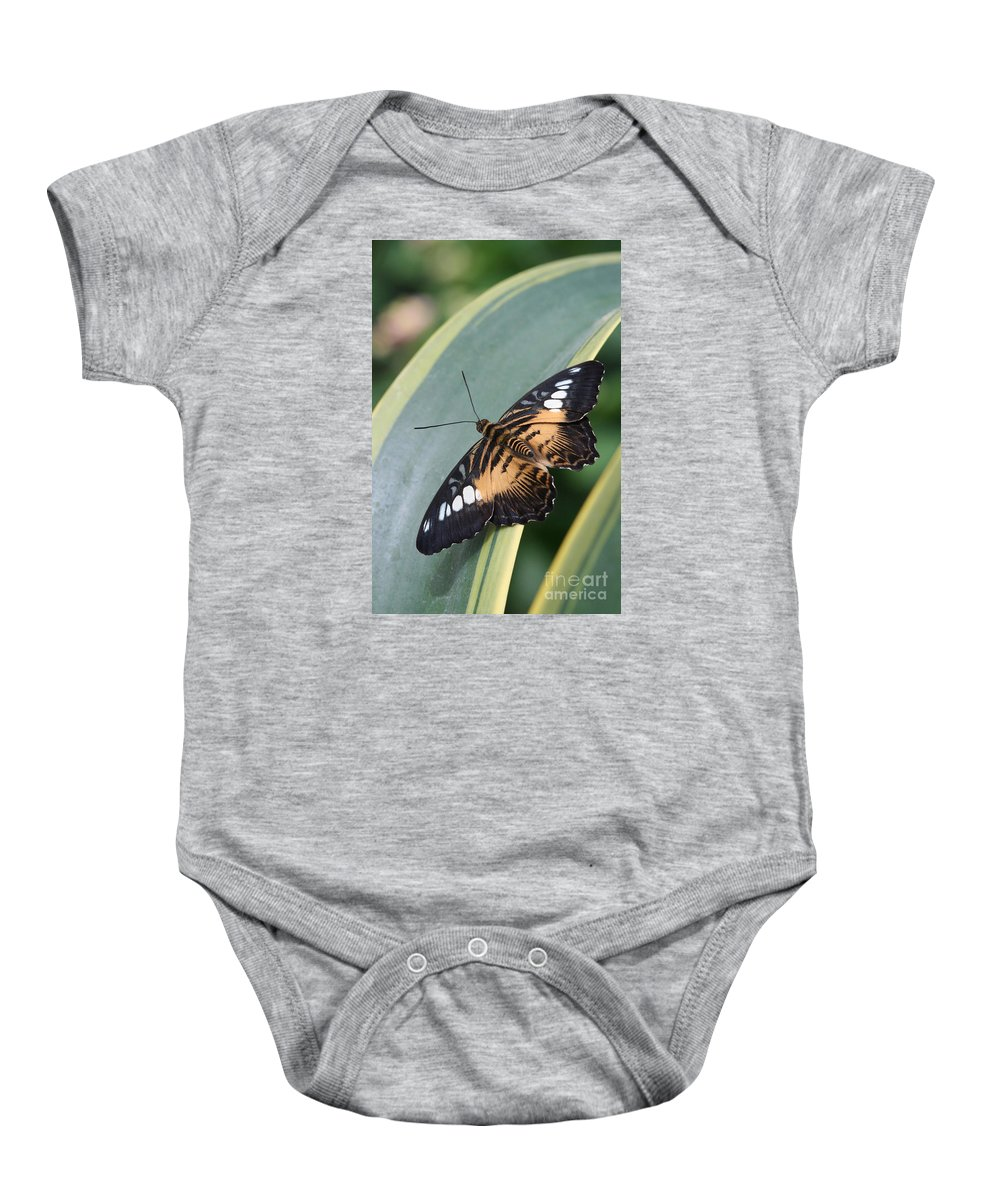 Butterfly Baby Onesie featuring the photograph Brown Clipper Butterfly #4 by Judy Whitton