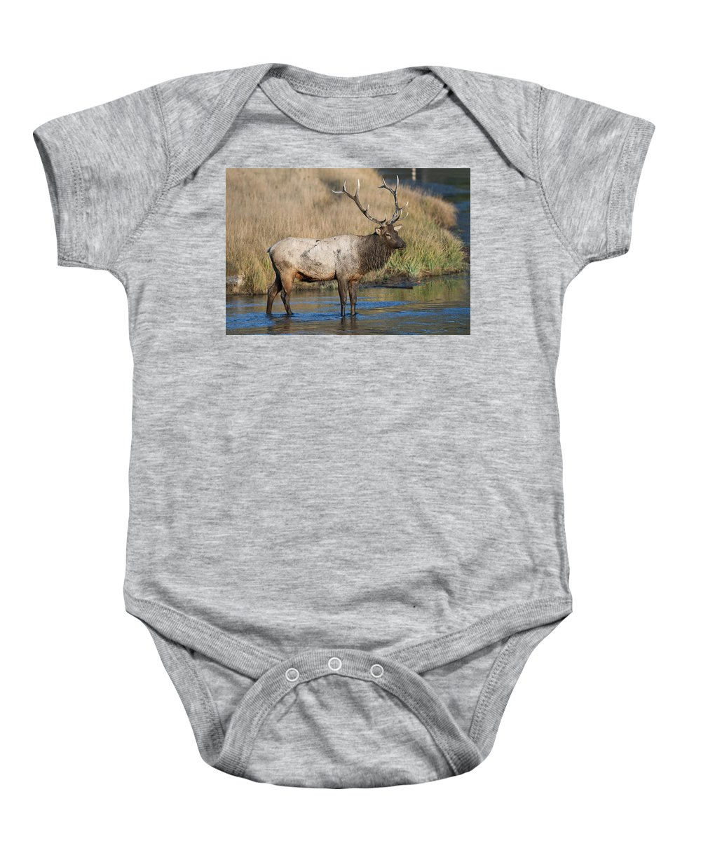 Bull Elk On The Madison River Baby Onesie featuring the photograph Bull Elk On The Madison River by Gary Langley