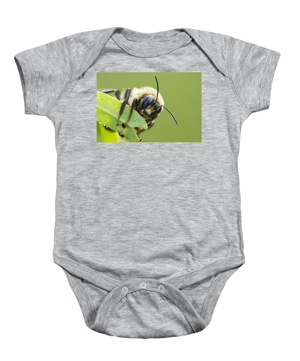 Background Baby Onesie featuring the photograph Bumblebee by Mircea Costina Photography