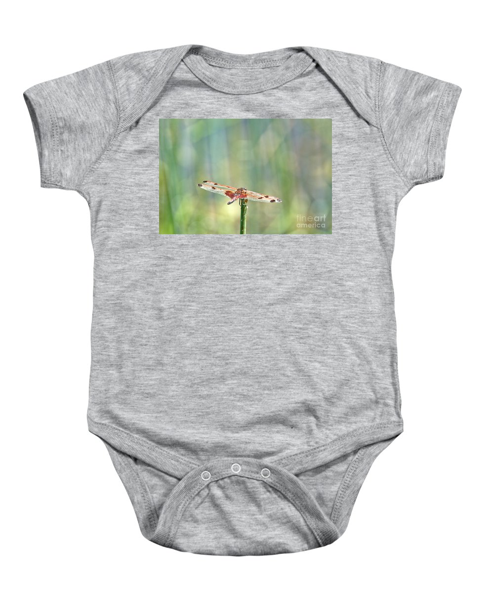 Dragonfly Baby Onesie featuring the photograph Calico Pennant From Above by Cheryl Baxter
