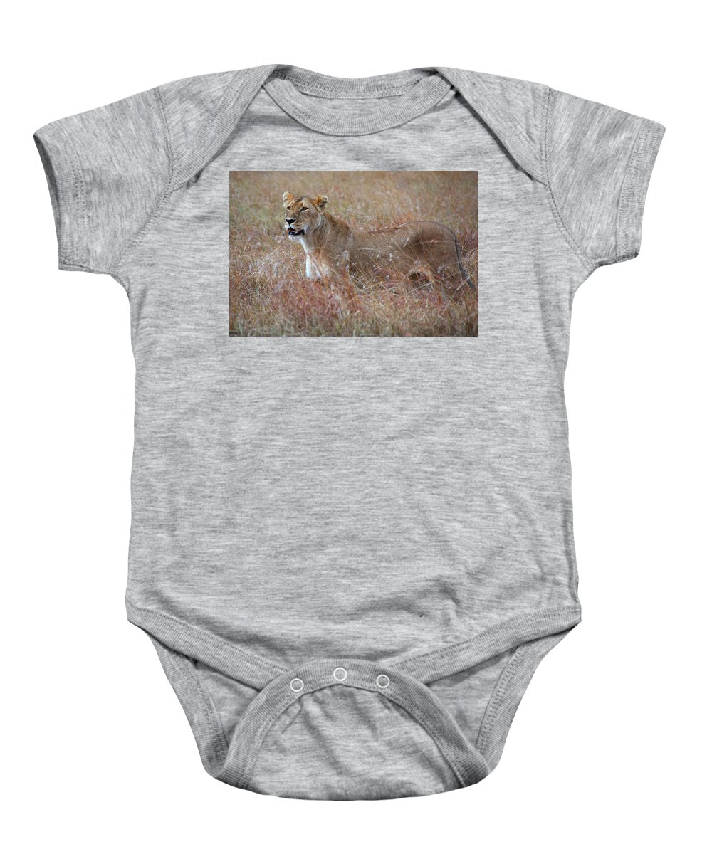 Lion Baby Onesie featuring the photograph Camouflaged Female Lion In Grass by Carole-Anne Fooks