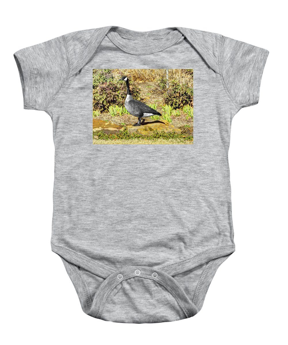 Hdr Baby Onesie featuring the photograph Canadaian Goose by John Straton