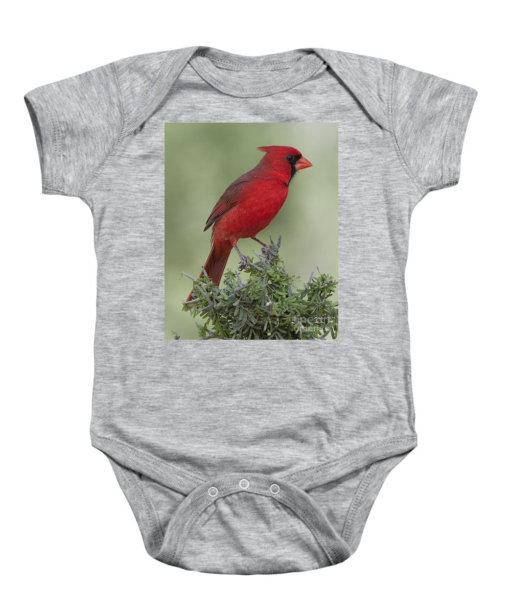 Male Baby Onesie featuring the photograph Cardinal On Tree by Barbara Rabek