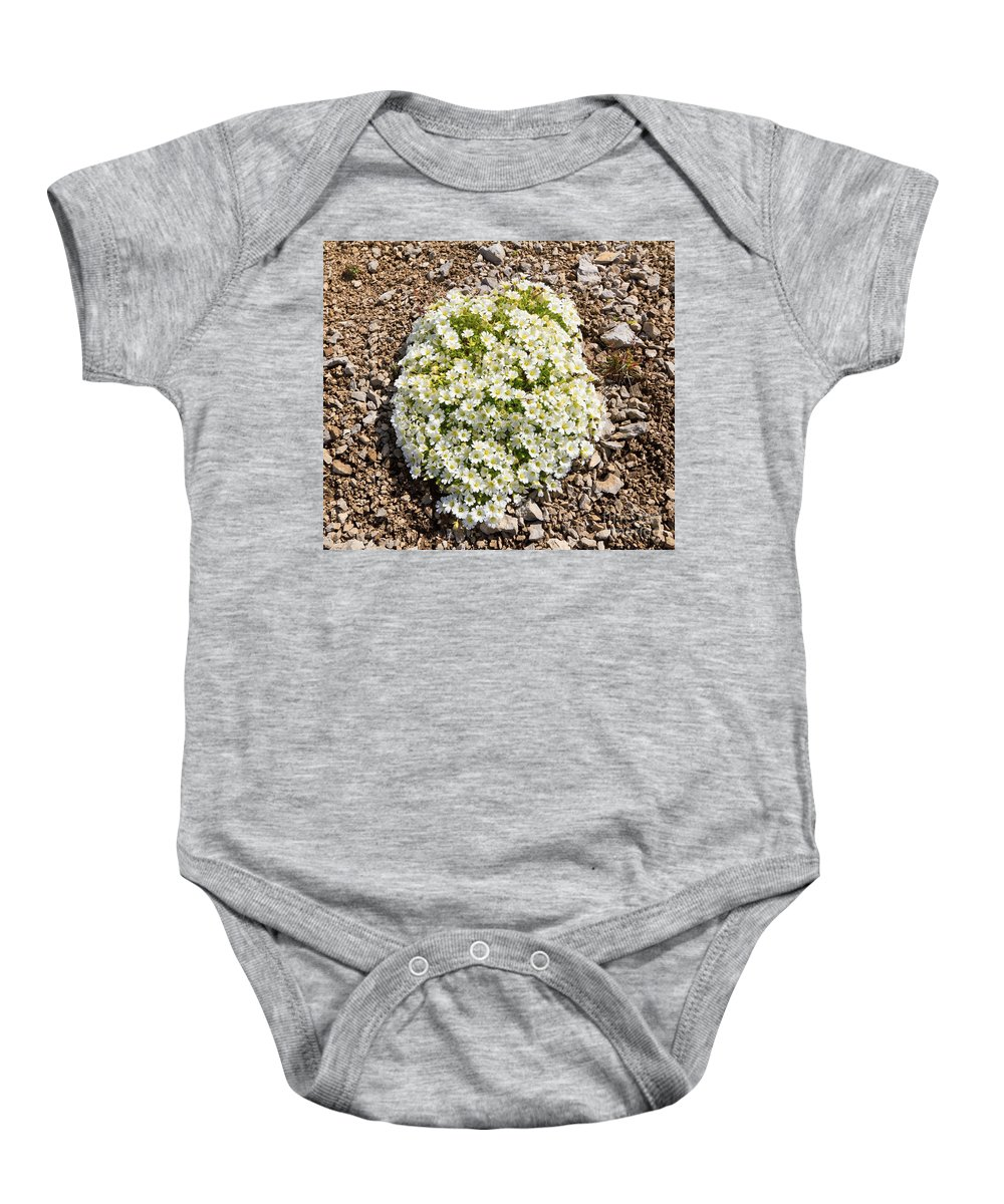 Background Baby Onesie featuring the photograph Cerastium Uniflorum by Antonio Scarpi
