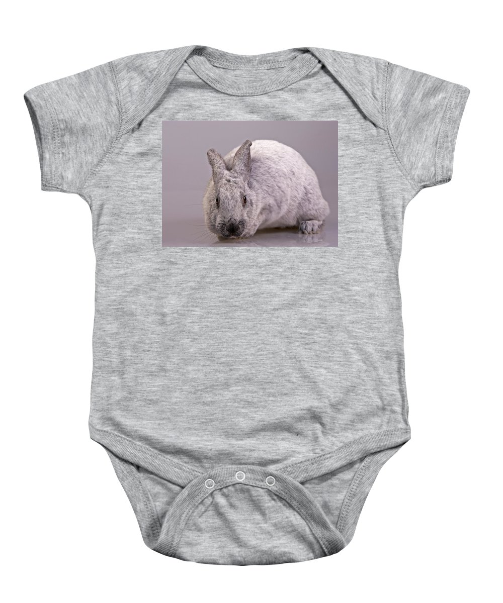 Mammal Baby Onesie featuring the photograph Champagne D'argent by Jack Milchanowski
