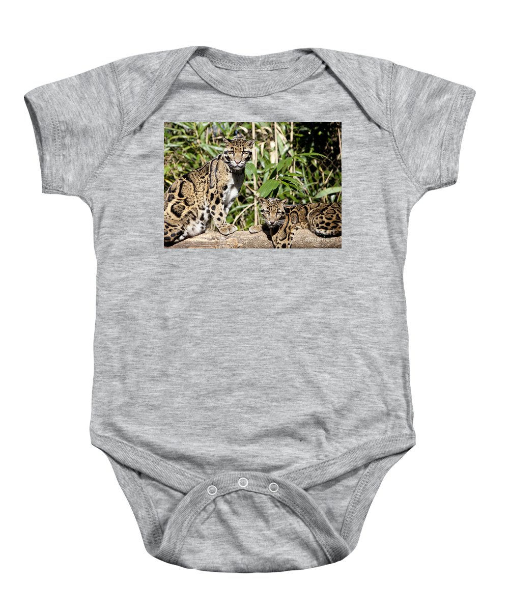 Clouded Leopard Baby Onesie featuring the photograph Clouded Leopards by Brian Jannsen