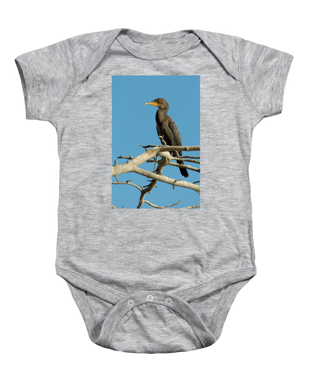 Cormorants Baby Onesie featuring the photograph Cormorant by Sebastian Musial