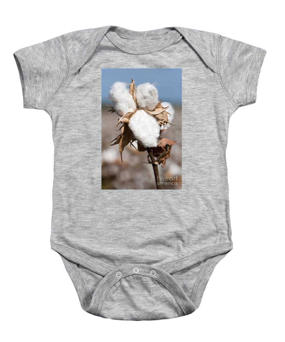 Growth Baby Onesie featuring the photograph Cotton Bolls by Hagai Nativ