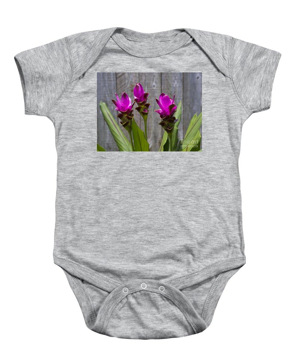 Curcuma Baby Onesie featuring the photograph Curcuma Flowers by Allan Hughes