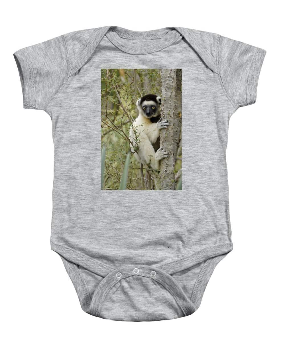 Africa Baby Onesie featuring the photograph Curious Sifaka 1 by Michele Burgess
