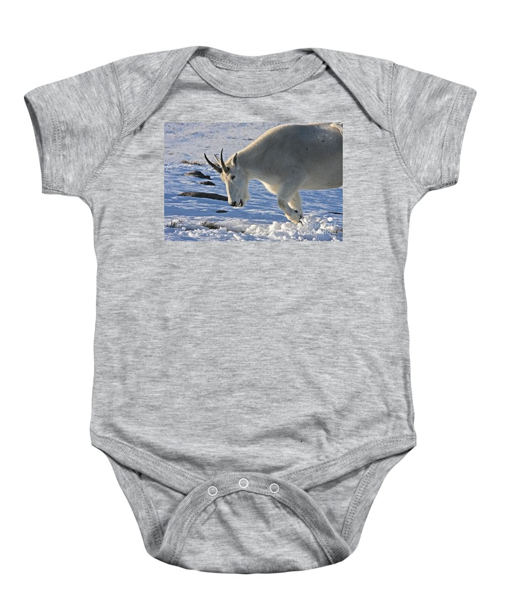 Mountain Goat Baby Onesie featuring the photograph Digging For Dinner by Jim Garrison
