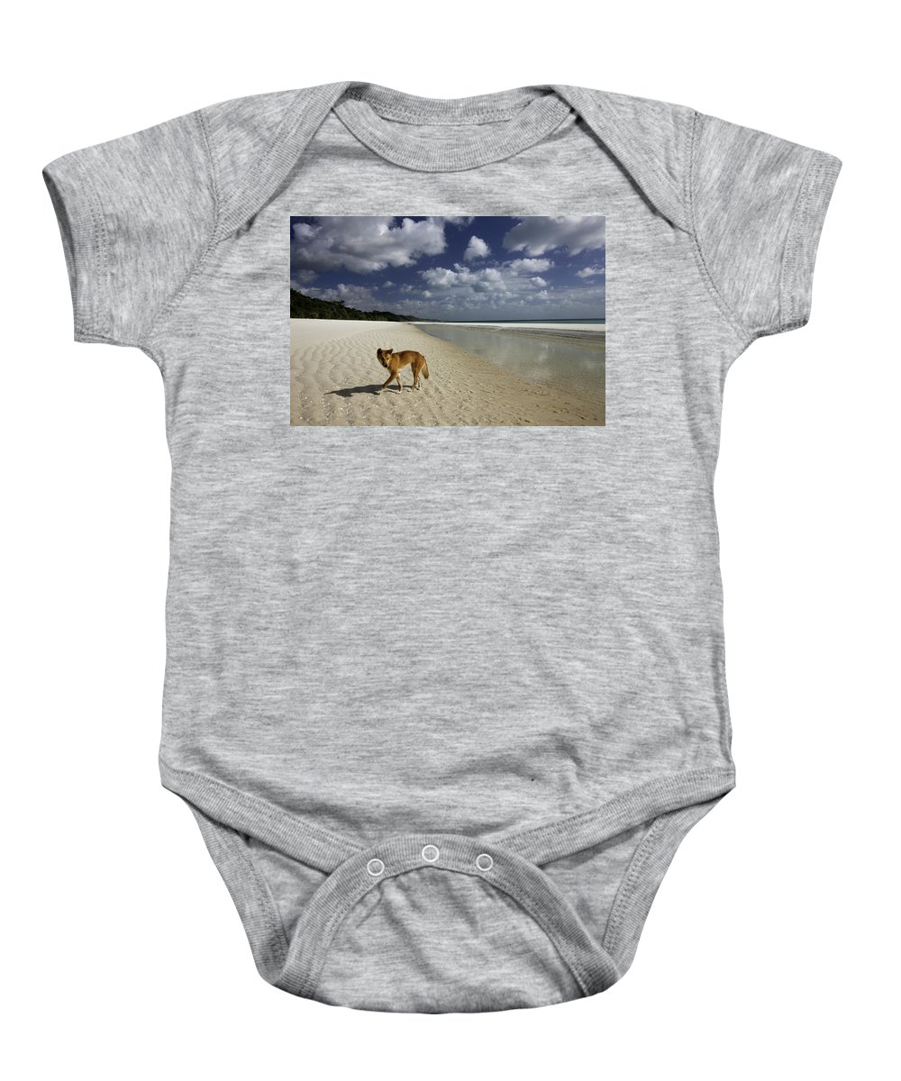 Alertness Baby Onesie featuring the photograph Dindo, Western Beach, Fraser Island by Peter Essick